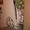 .Роспись стен,  потолков,  мебели-в любом стиле и направлении в Витебске #920997