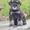 Элитные щенки цвергшнауцера,  черного с серебром окраса #1633182
