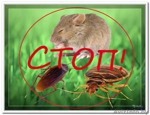 Услуги по травле крыс и мышей - Изображение #1, Объявление #1537794