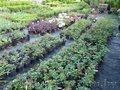 Хвойные и лиственные растения в контейнерах.