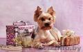 Стрижка собак мелких и средних пород,  кошек, декоративных кроликов!
