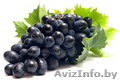 Виноград саженцы